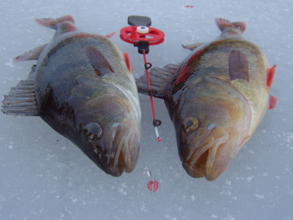 Isfiske gädda & abbore Halland. Fiskepaket med boende i stuga i Hallands vackra inland.  Falkenberg