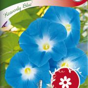 Blomman för dagen, Heavenly Blue