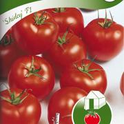 Tomat, Hög
