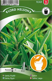 Salvia, Krydd-