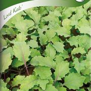 Kål, Grön- ''Lord Kale''