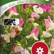 Luktärt ''Villa Roma'' White & Rose