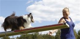 agilitykurser halmstad hundarena