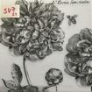 Servetter svarta mönster - Blommor & bin