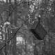 7 Ulrica Carlsson. 115_Mån.Bild mars-21_Fågelholk på fall