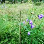 Blommor på ängen (2)