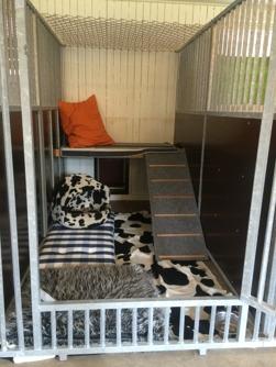 hunddagis, hundbox, hundstall