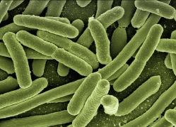 Foto på e-coli bakterier av Gerd Altmann, Pixabay