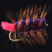 Purple-Orange Woolly Worm