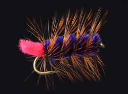Purple-Orange Woolly Worm