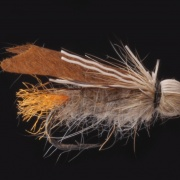 Brown Winged  Sedge