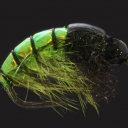 Chartreuse BH Gammarus
