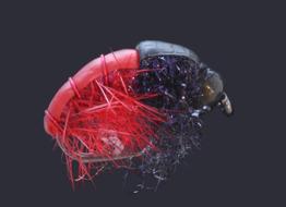 Red BH Gammarus