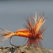 Humpy orange