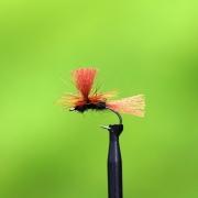Parachute brown