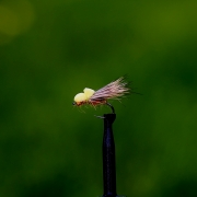 Ballon caddis yellow