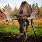 Moose park - Jaap Erkelens