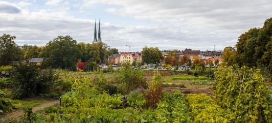 MAT i Växjö är den årliga mötesplatsen för kunskap och inspiration kring hållbar produktion och konsumtion av mat.