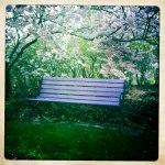 Fotograf Christel Lind hade gärna lagt sig här och kollat på Halmstads finaste träd.