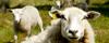 Djurens rätt får