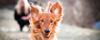 Insamlingsdans för Djurens Rätt