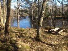 Pool 3, Emån, Grönskog