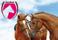 hästar exelent