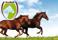 två hästar exelent