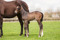 Reliable Man x Black Cat filly-4
