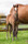 Reliable Man x Rosie Dane filly-2