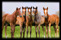 Reliable Man First Foals websida (800x518)
