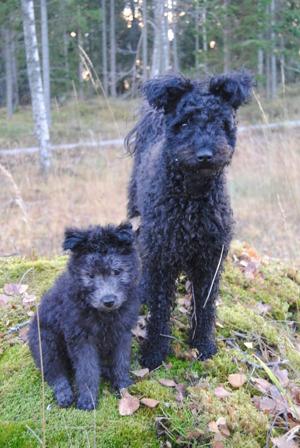 Idun och Lyra, foto: fam Palmius