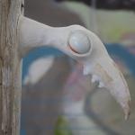 Totem-bird 3 2013