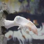 Totem-bird 2 2013