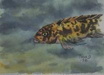 Marmorerad Ciklid 1998 Akvarell Privat ägo
