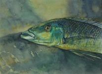 Ciklid 1998 Akvarell Privat ägo