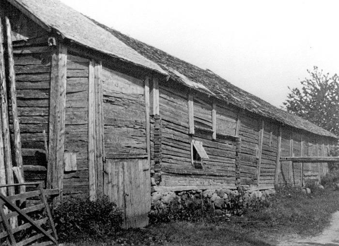 """A. 7 Ivarstorps gamla ladugård före 1938. Den gamla ladugården löpte utmed landsvägen - detta är utsidan mot vägen med drevet för tröskning. Fotot taget från väster med gårdstunsledet alldeles till vänster på fotot. Man kan ana Ljungstorpsvägen framför. Vägen gick då ett par vägbredder mer söderut och flyttades och breddades troligen när ladugården revs, så att vägen nu kom att gå just där ladugården låg. Inget syns därför efter denna byggnad idag. Den stora ladugården köptes i sin helhet och revs av Mejeristen Magnus Pettersson i Varnhem. Det blev bränsle för flera år i mejeriet. Oskar brukade säga att """"ladugården, den eldade Magnus upp i panna!"""" Lägg märke till tröskgången som faktiskt går ut till en del mot vägen och man fick ta sig i akt när tröskning pågick med en häst som gick runt, runt i tröskgången, som då vid varje varv gick ut i vägbanan på den smala vägen. Ladugården hade """"skonke"""". """"Skonke"""" = mellan ladugård och stall kunde man köra in under tak, inget golv, ränne ovanpå innertak, inga dörrar. (Not; Alf Brage) Ladugården revs i samband med byggandet av ny ladugård som stod färdig 1938 under Oskar Jonsson. Insatt av Kent Friman, 2014-02-17. Läs mer på www.ljungstorpshistoria.se!"""