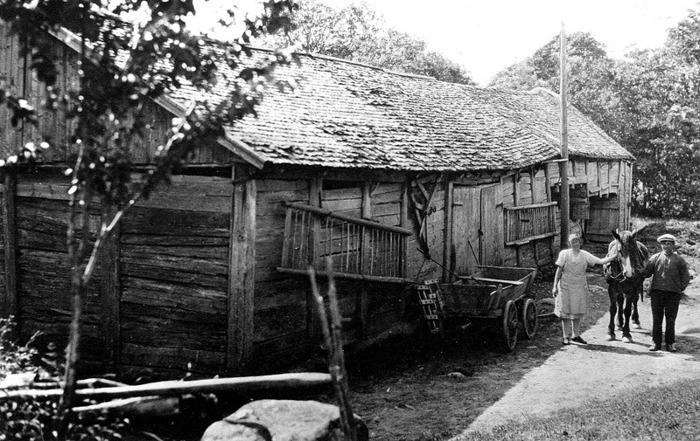 """A. 8 Ivarstorps ladugård - gårdssidan. Den gamla ladugården med paret Oskar och Anna Jonsson på gårdssidan 1930-talets första hälft. Ladugården var mycket gammal. Den var uppförd med knuttimrat Fähus och i övrigt med s.k. skiftesverk. Troligen hade den också s.k. Mesula, en benämning på mittstolpar. Här kan man se att stockar gick att ta ned för att lättare bärga skörd och man använde det också som """"skonk"""" eller """"skunke"""", dvs direktinkörning utan dörrar och golv men med ränne för skörd - se ladugården längst bort. (not; Alf Brage). Ljungstorpsvägen gick på andra sidan ladugården där också tröskgången fanns. Bilden tagen från öster och alltså innifrån gårdsplanen. Lägg märke till alla redskap som fanns tillgängliga utmed ladugården på gårdssidan. Ägare åren 1925-1964; Oscar Ferdinand Jonsson, född 1890 - dör 1964 30/1 i Ivarstorp 1:1. Hustrun Anna Katarina Berg, född i Varnhem 1897 - dör 1969 26/3 i Ivarstorp 1:3. Son Bengt Oskar Evert, född i Mariestad 1931 den 18/1. Ladugården var svårt förfallen och revs 1937 och användes som bränsle i Trädgårdens Mejeri. Insatt av Kent Friman, 2014-02-17. Läs mer på www.ljungstorpshistoria.se!"""
