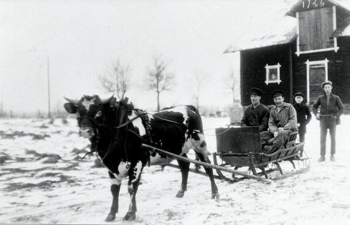 C. 8 (2) Skjuts med oxe, prästgården 1926. Pojkarna är Otto Jonsson, 13 år och Svens Sköld med morbröderna Johan och Hjalmar Wennström i släden. Insatt av Kent Friman, 2014-02-26.