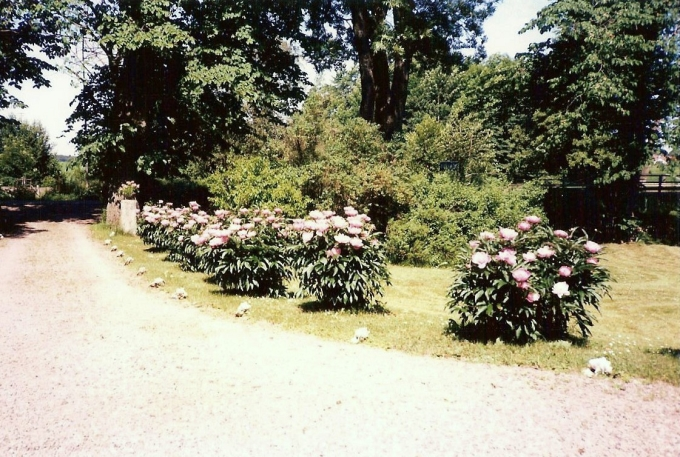 Pioner och snäckor 1986. Från Anita Heymans, född Hermansson, samling, 2017