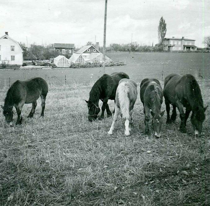 Gustav Linderoths hästar 1960-tal