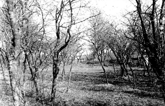 Blombergss trädgård m gravhögar - Foto: S. Welin 29/9 1930