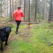 Löp och fys träning med hund