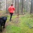 Löpträning med hund - 1 månad Obegränsad träning utan bindningstid