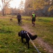 Löpträning med hund - 1 månad Träna sällan 5 pass
