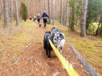 Löpträning med hund - 1 månad Obegränsat träning 3 mån bindningstid