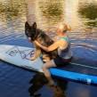 SUP med hund - Kurs - SUP med hund - start 1 juni