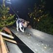 Dogparkour - med sikte på titlar