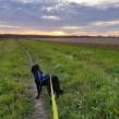 Bergahundar 4X - Klippkort för äventyr med hund