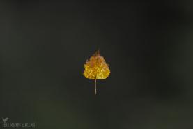 Löv-4580